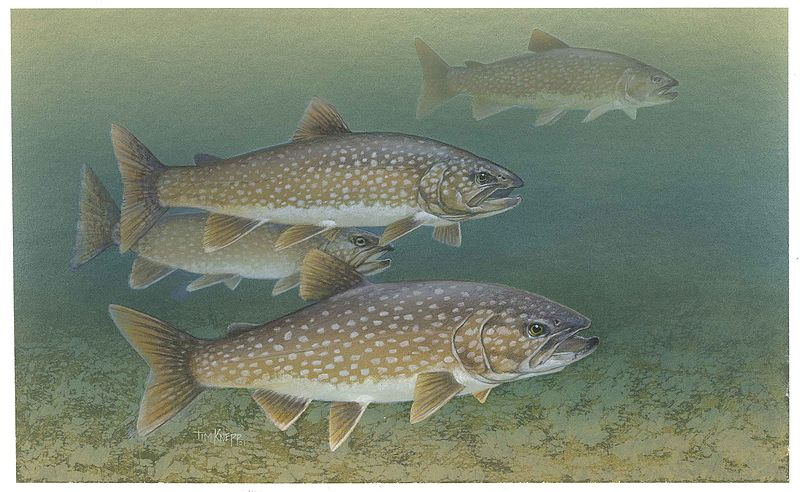 lake-trout-art-2